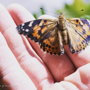 Colourful butterfly held in cupped hand