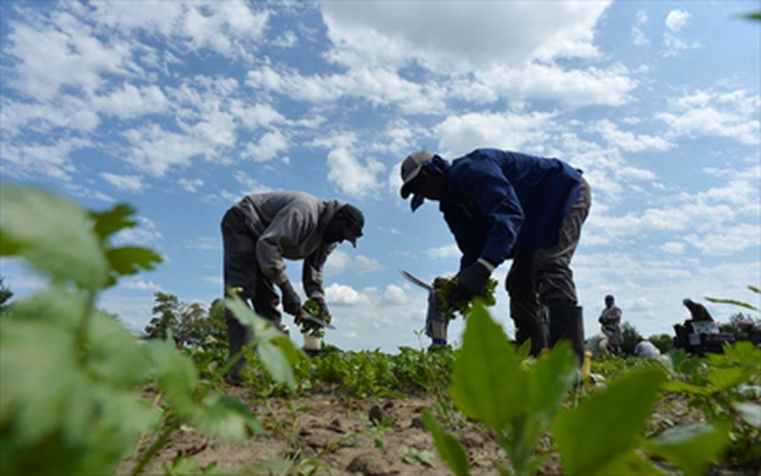 2 workers attend to farm crops in field
